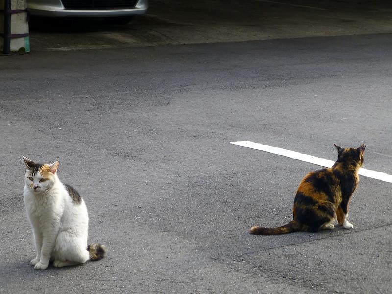 動かない猫たち