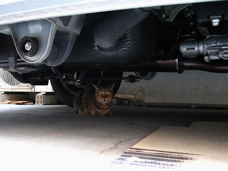 車の下のキジトラ猫1