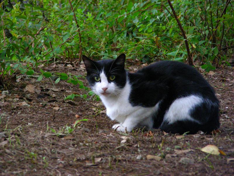 土の上の黒白猫2