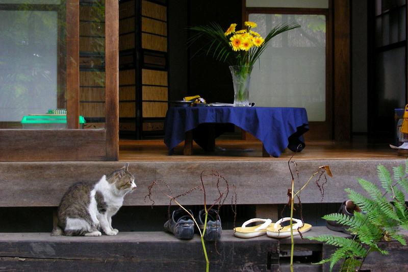 和風な居間が似合うキジ白猫2