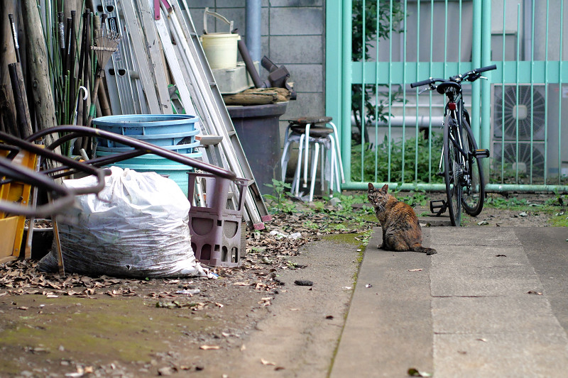 資材とサビ猫1