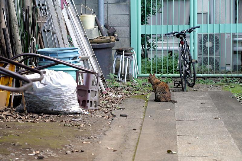 資材とサビ猫2