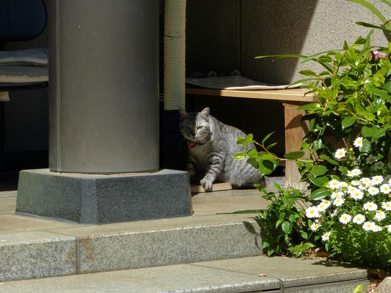 爪研ぎ機とサバトラ猫1