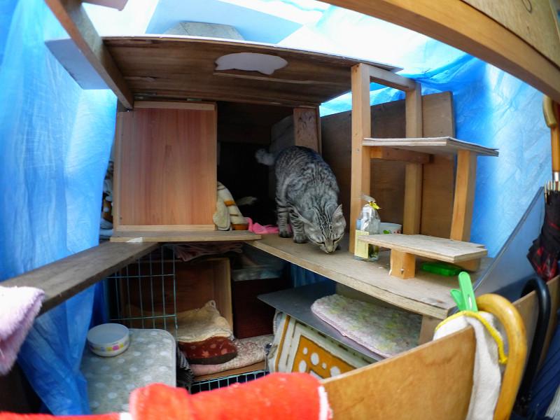 大きな猫ハウス内のサバトラ猫1