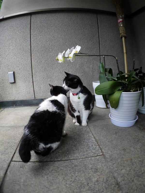 仲良し義理姉妹猫1