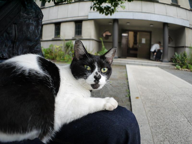膝でのんびりしてる白黒猫1