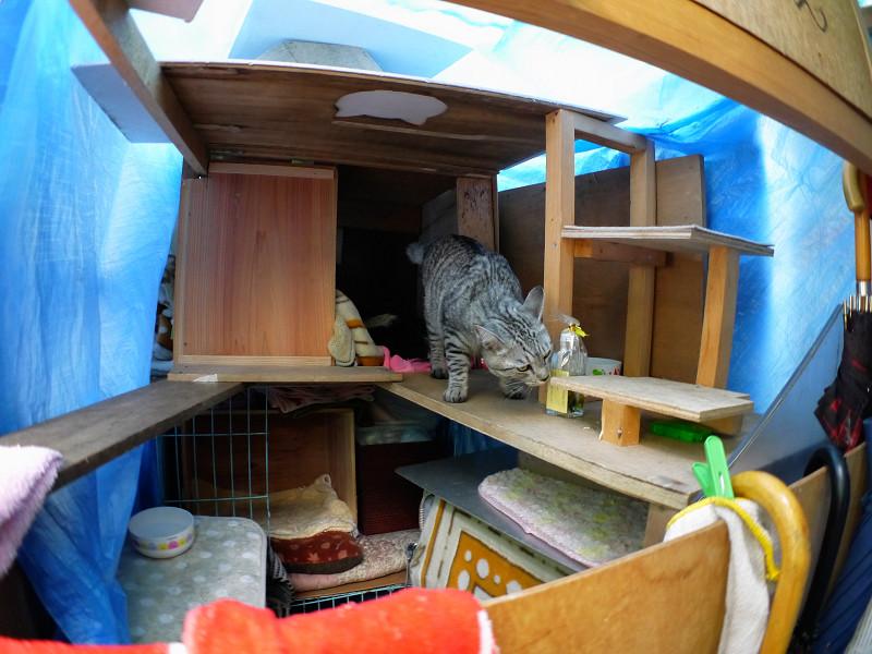 大きな猫ハウス内のサバトラ猫2