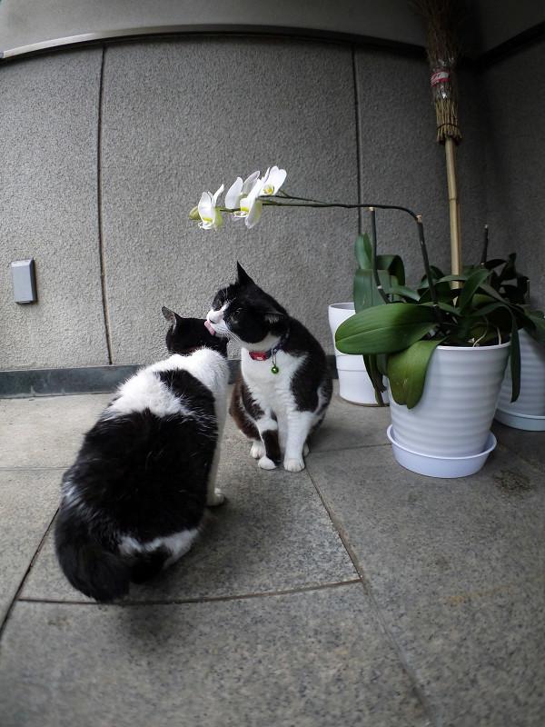 仲良し義理姉妹猫2