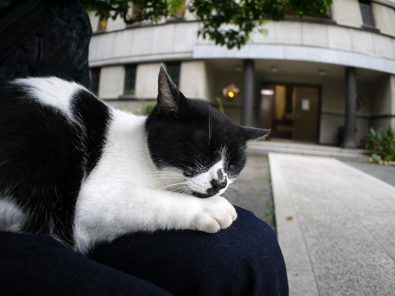 膝でのんびりしてる白黒猫2