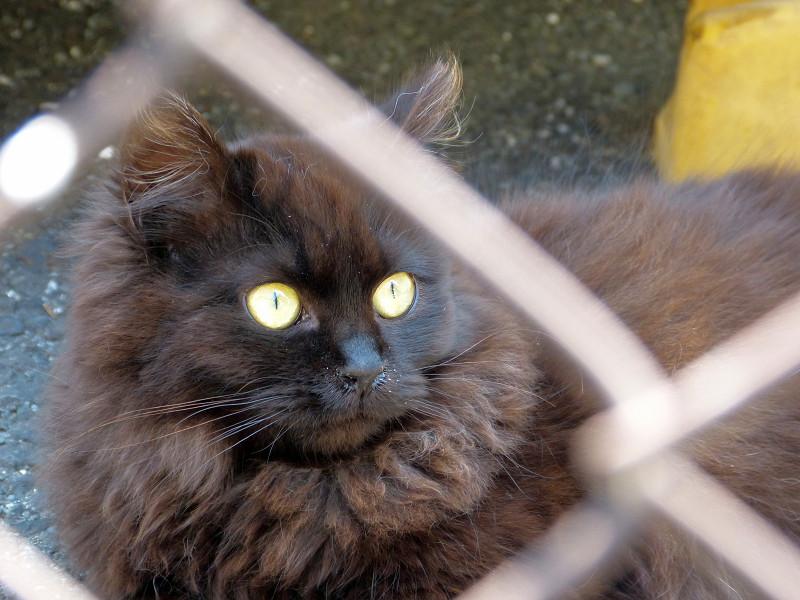 もふもふ毛並みの黒猫1