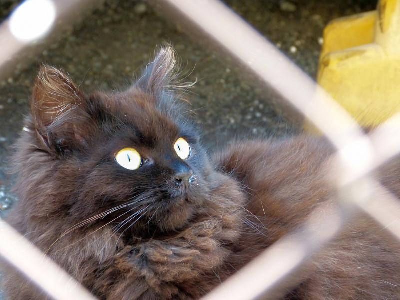 もふもふ毛並みの黒猫2