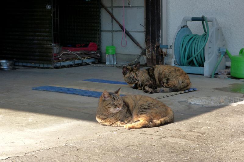 まどろむ猫2匹2