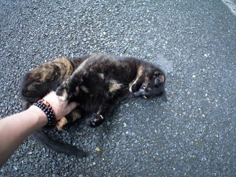 再会してた黒サビ柄猫2