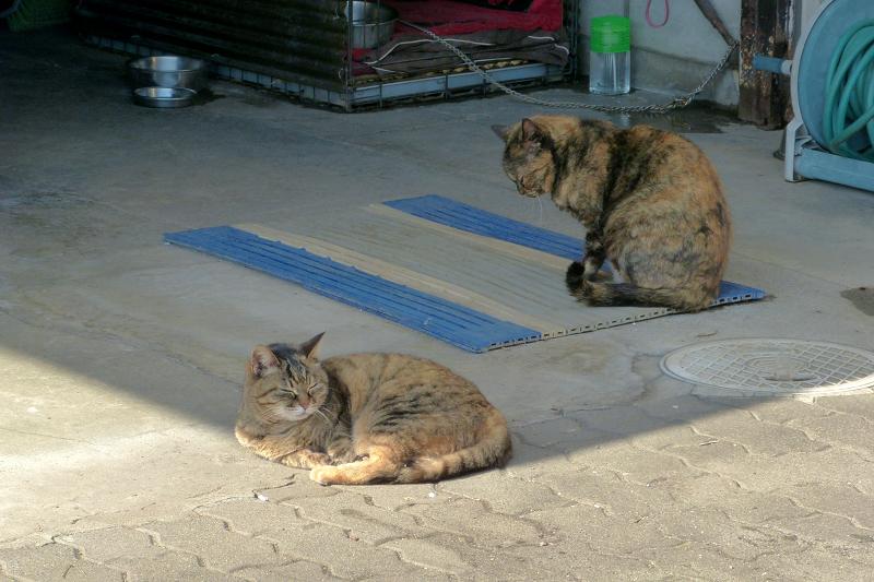 まどろむ猫2匹3