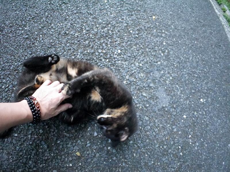 再会してた黒サビ柄猫3