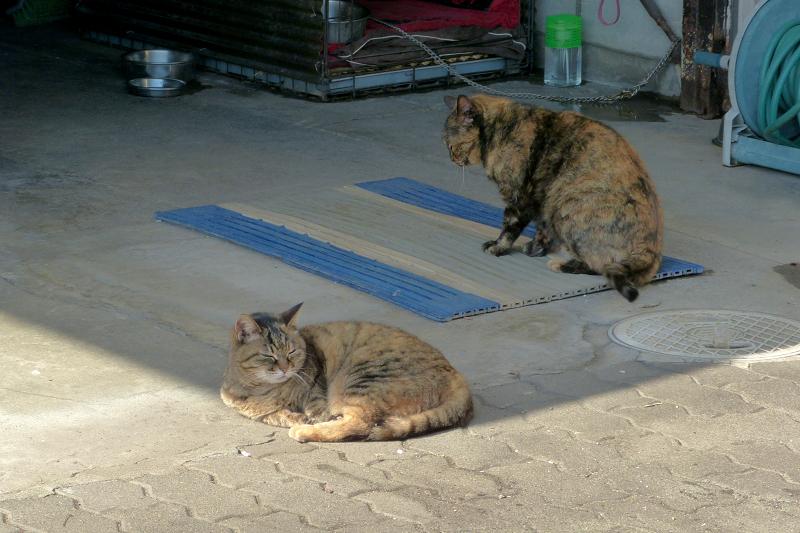 まどろむ猫2匹4