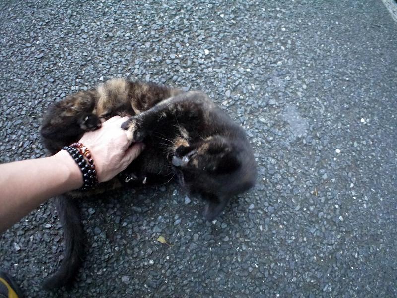 再会してた黒サビ柄猫4