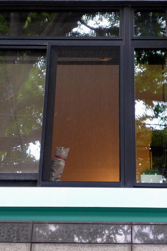 マンションの窓と猫1
