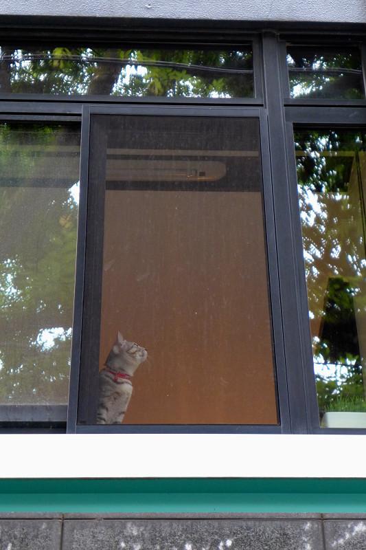 マンションの窓と猫2
