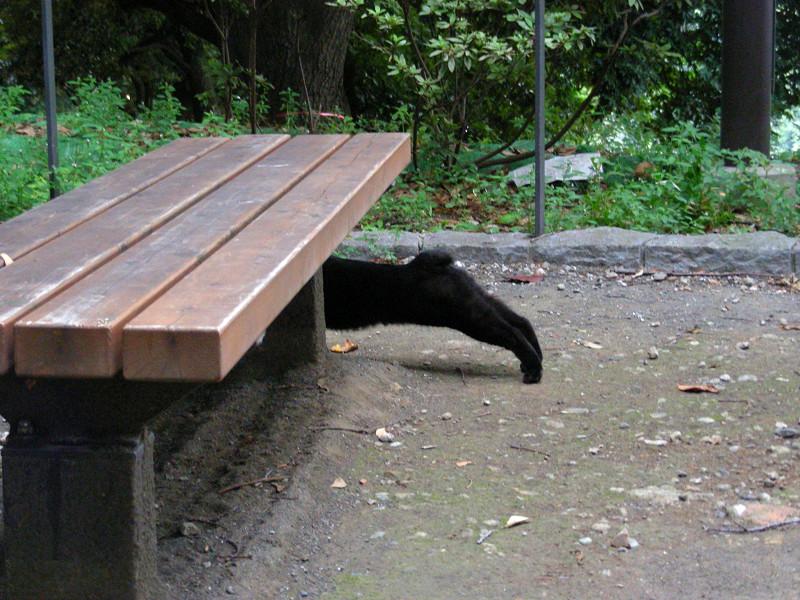 体を伸ばしてる黒猫