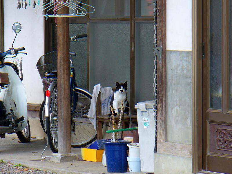 民家と黒白猫1