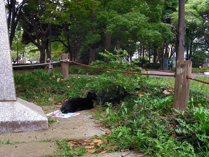 公園と石碑と黒猫2