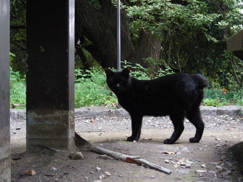 こっちを見た黒猫