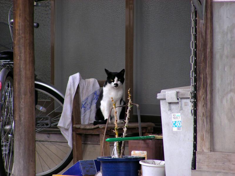 民家と黒白猫2