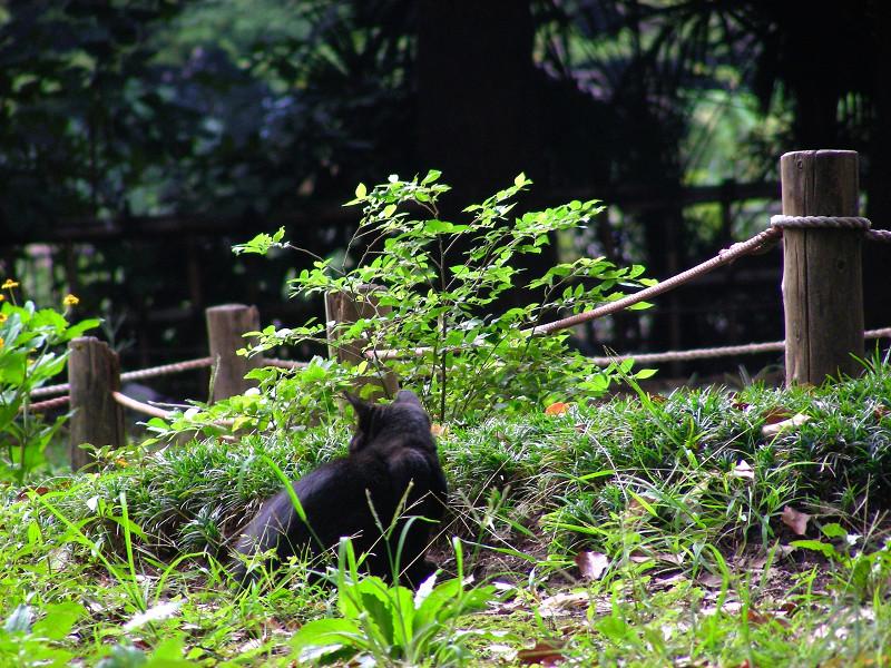 公園と石碑と黒猫3