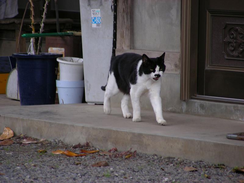 民家と黒白猫3