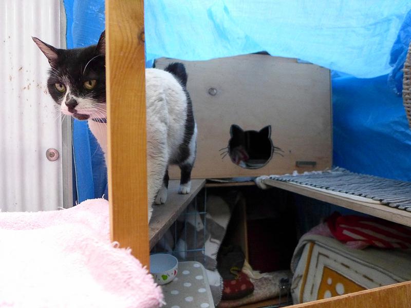 猫ハウスから出てきた白黒猫1