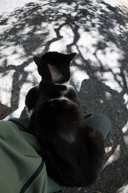 木の影と黒白猫2