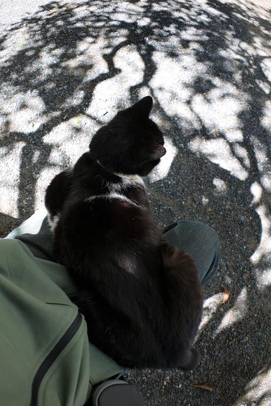 木の影と黒白猫3