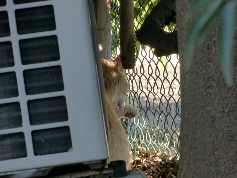 室外機の横の猫2