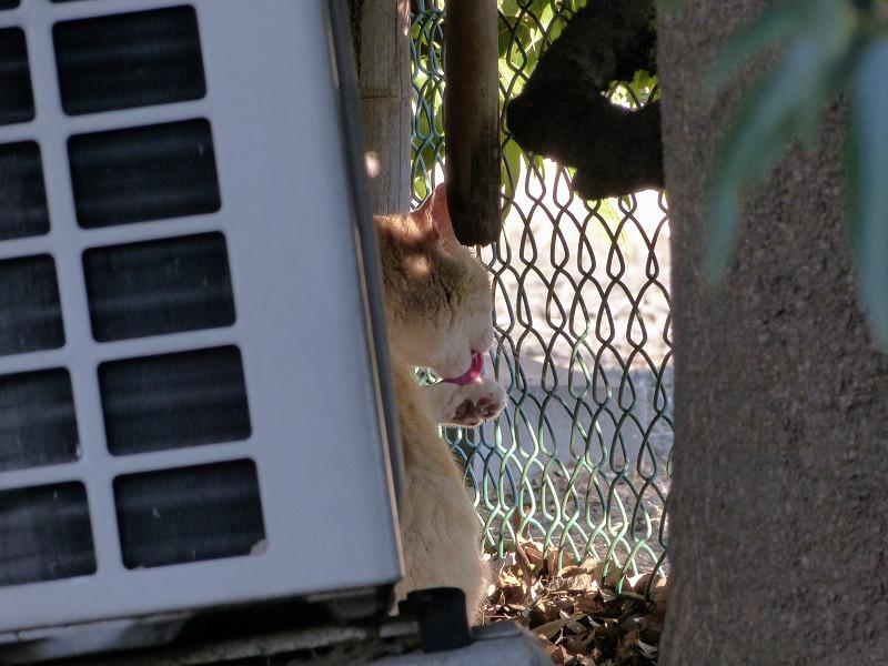室外機の横の猫3