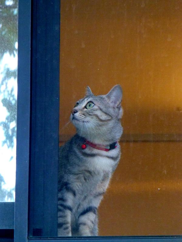 マンションの窓から見えた猫1