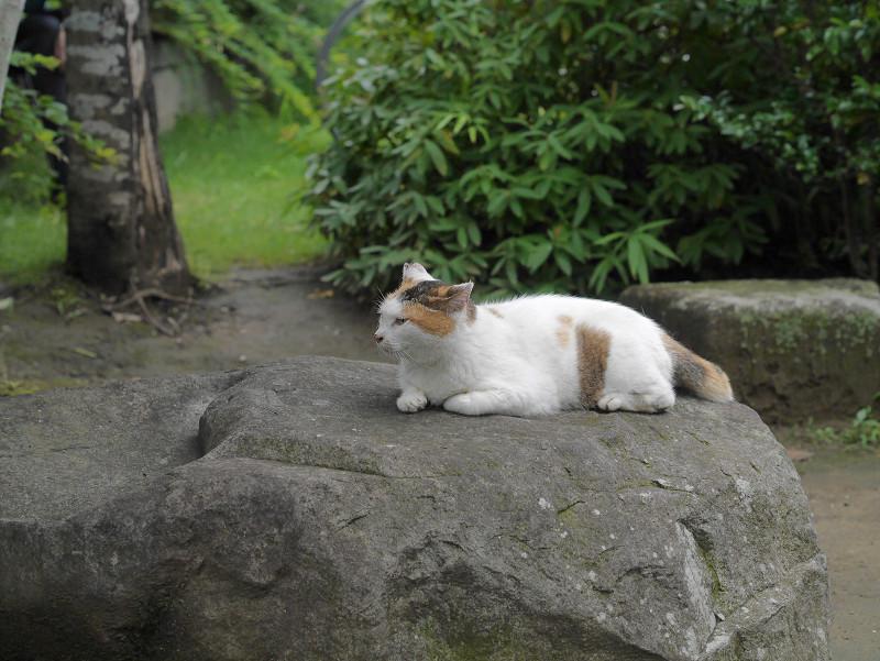 大岩と白三毛猫1