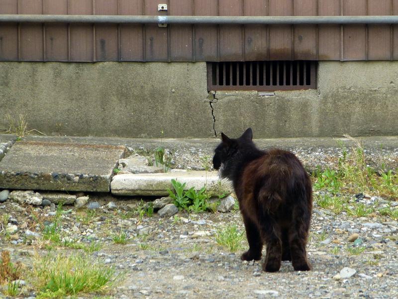 空き地の黒猫3