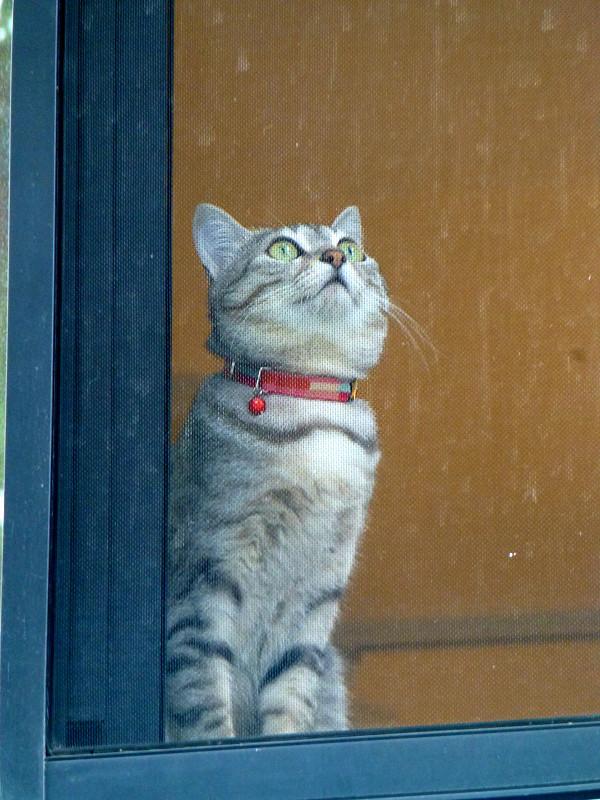 マンションの窓から見えた猫3