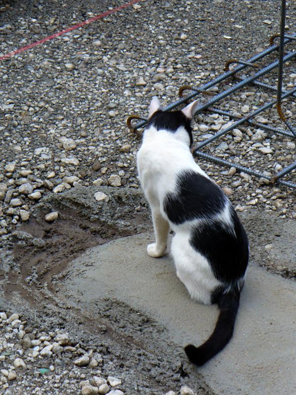 建築現場の黒白猫1