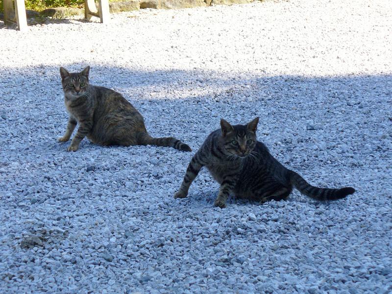 日向と日陰の猫たち1