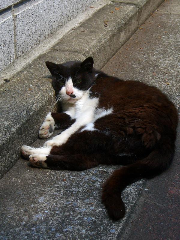 ブロック前の黒白猫2