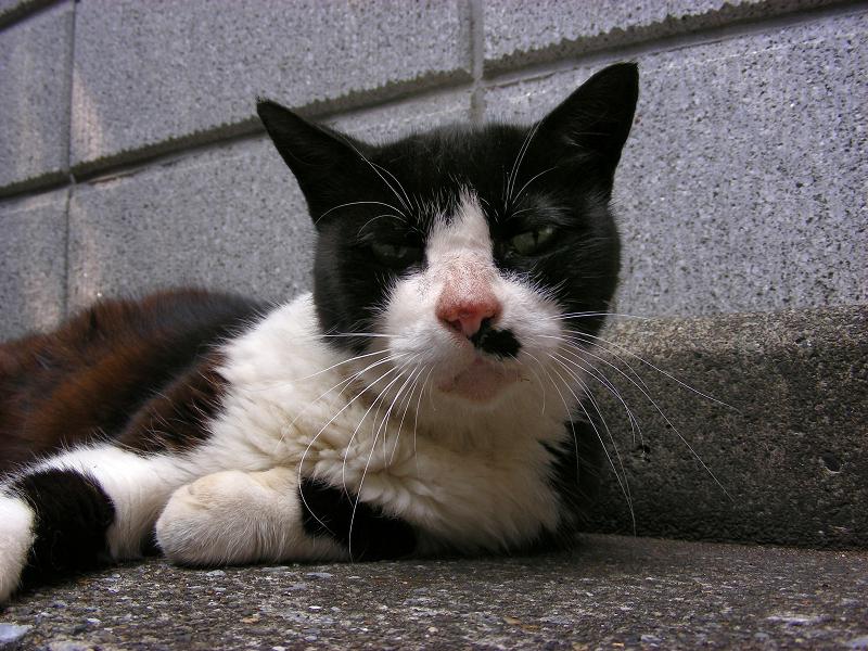 ブロック前の黒白猫3