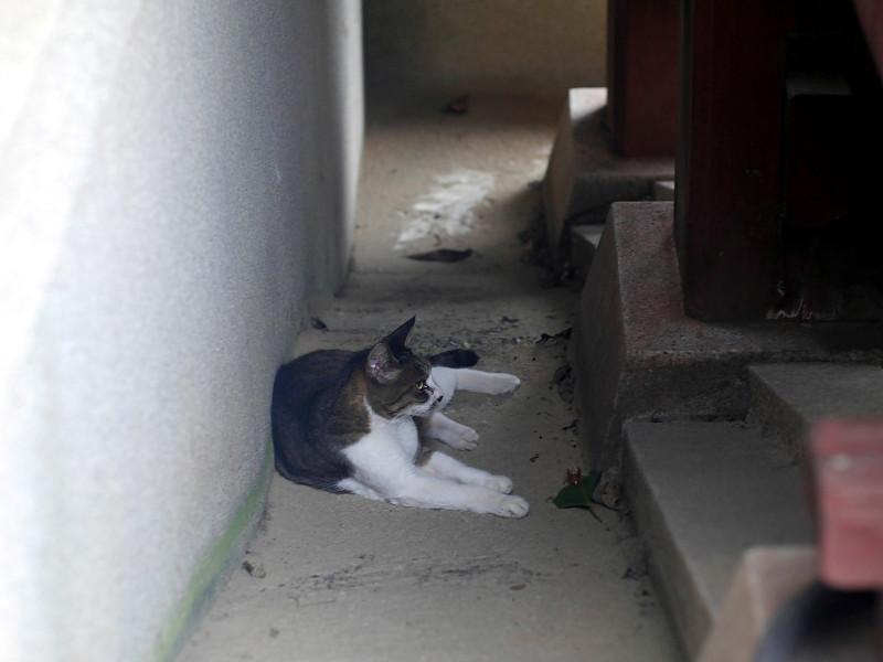 スロープで横たわるキジ白猫2