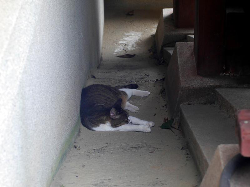 スロープで横たわるキジ白猫3