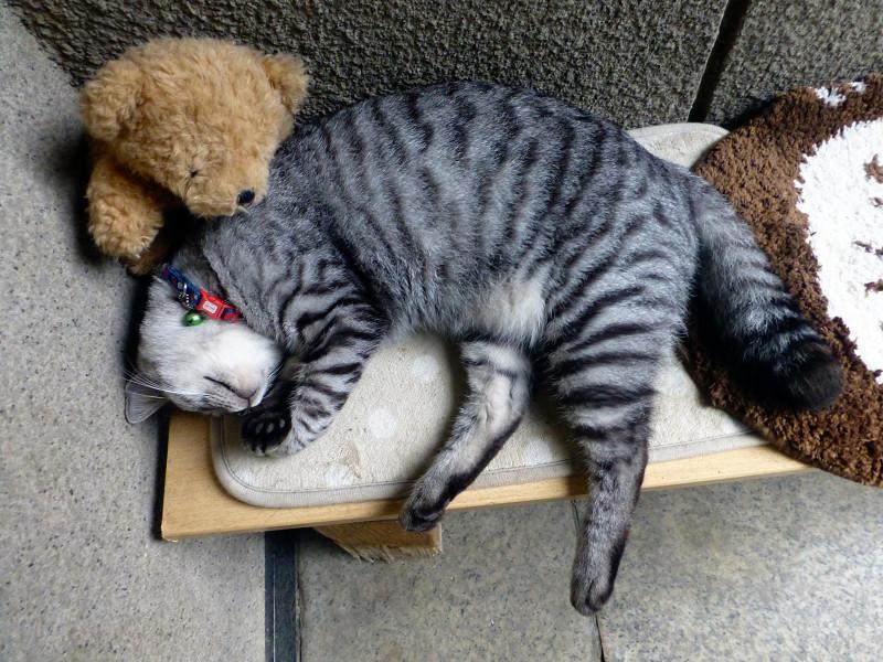 すごい寝相のサバトラ猫1