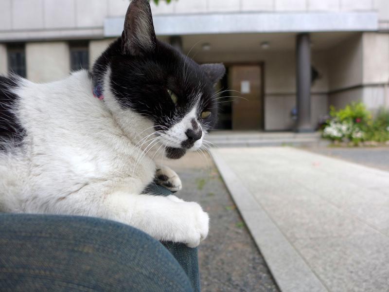 膝に乗ってる白黒猫1