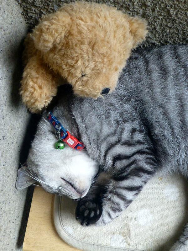 すごい寝相のサバトラ猫2