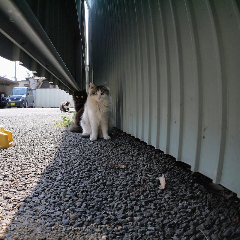 トタンの陰と隙間の猫たち1