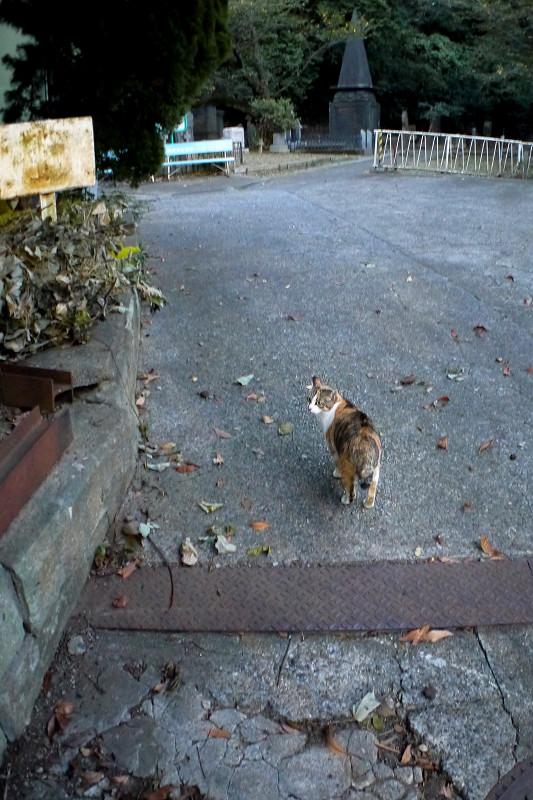 園内に入った三毛猫1